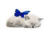 Blue butterfly and kitten