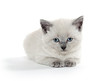 Cute baby kitten on white