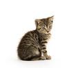 Cute tabby kiten