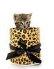Cute tabby kitten in box