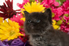 Cute baby kitten and flowers