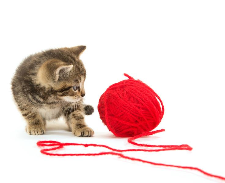Cute tabby kitten and yarn