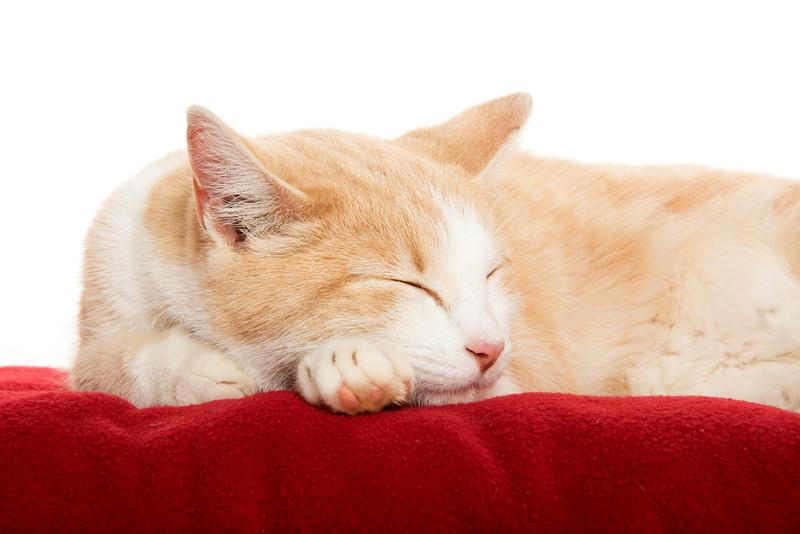 Cute cat on blanket