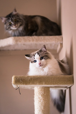 two cats on perches