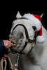 Santa horse eating a candy cane