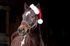 Santa horse
