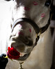 valentines horse