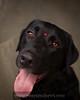 Amos, my Valentines puppy