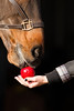 Horse and apple