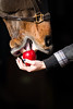 horse eating an apple