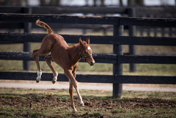 foal kicking up his heels