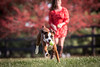 boxer playing fetch with owner