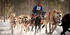 sled dogs racing in northern michigan
