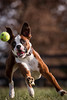 boxer catching a ball