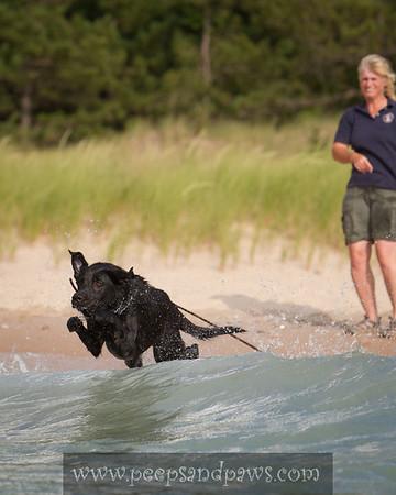 black lab playing fetch into a lake