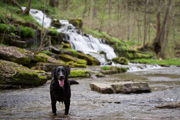Dog in a creek and waterfall
