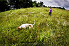 Coonhound puppy in a field with owner