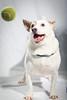 Gustas McCrae at the Lexington Humane Society on 2.19.2013