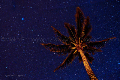 A_coconut_tree_and_stars