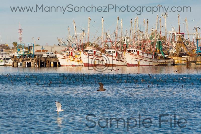 IMG_7774 Puerto