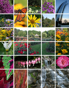 arbor_flower_pics2_final_large