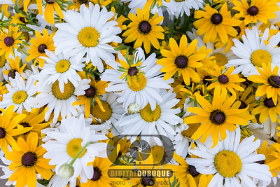 daisy_sunflower_bouquet_bloom