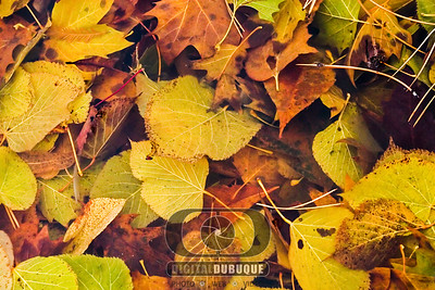 fall_leaves_in_water