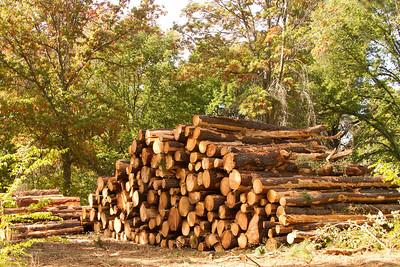 Tree logging