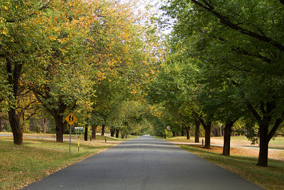 Tree lined road in early autumn