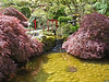 Beautiful Japanese pond in Bouchard Gardens, Victoria, BC