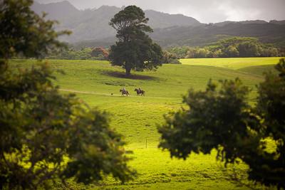 On Horseback in Hawaii