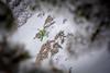 Snowbasin_4533