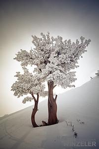 SkiingPhotography_WinterLifestyle_IMG_5567