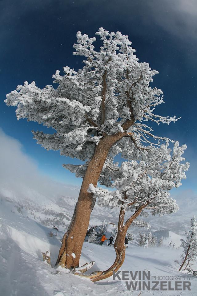 SkiingPhotography_WinterLifestyle_20080205_1393