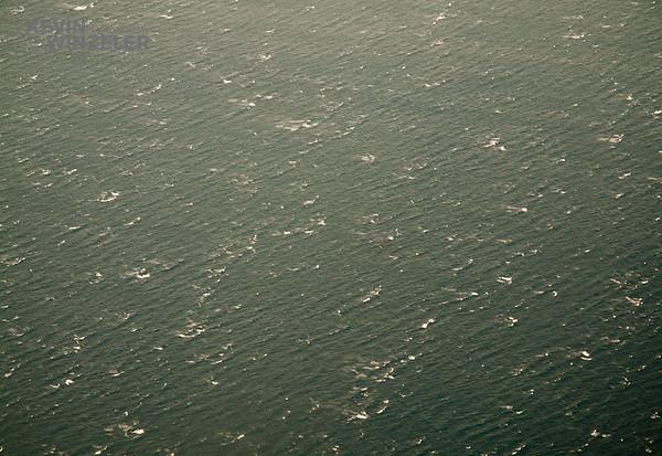 Underwater_Sports_photography_IMG_0763