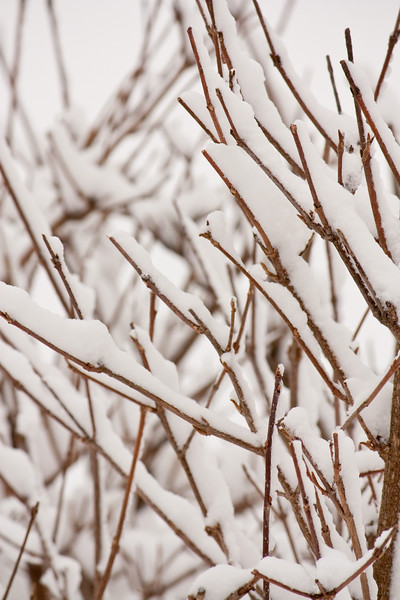 A late winter snow day in Chicago made for some nice photos. these branches made for excellent snow holders.