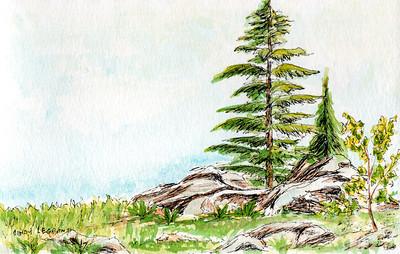 Peaceful Tree Scene