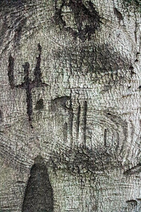 Carving in a Tree Trunk
