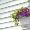vertical shot of a hanging flower basket against a vinyl siding backdrop.