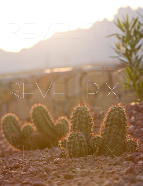 the sun rises over the mountains, backlighting the cactus plants buried in a stone surrounding. brightly lit.