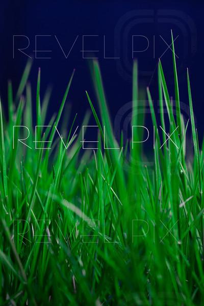 Macro Tall Grass Low Angle