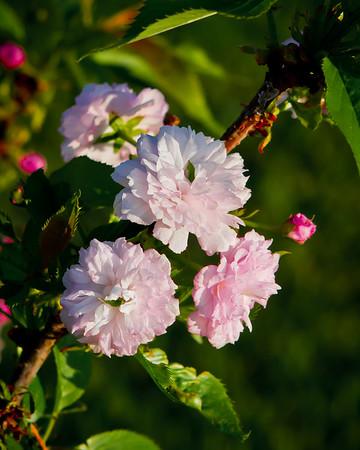 Blooms & Flowers