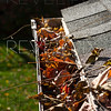 a shallow depth of field shot of a corner gutter filled with dead leaves.