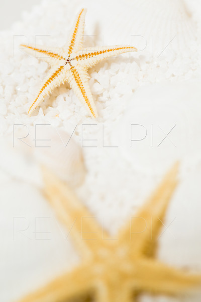 a vertical shot of starfish on shells and sand. macro shot in studio. focus on back starfish