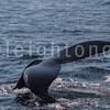 8-20-15-whales-leighton-3503