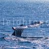 8-20-15-whales-leighton-3511