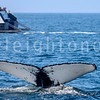 8-20-15-whales-leighton-3443