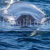 8-20-15-whales-leighton-3476
