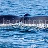 8-20-15-whales-leighton-3437