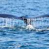 8-20-15-whales-leighton-3439